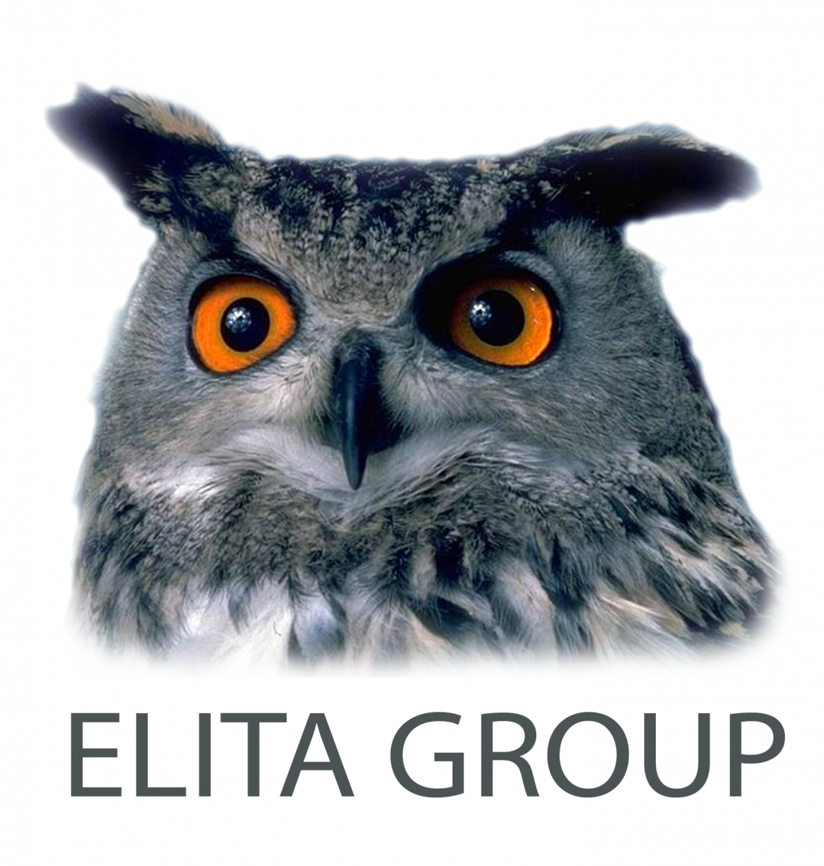 Фото: Логотип Elita Group